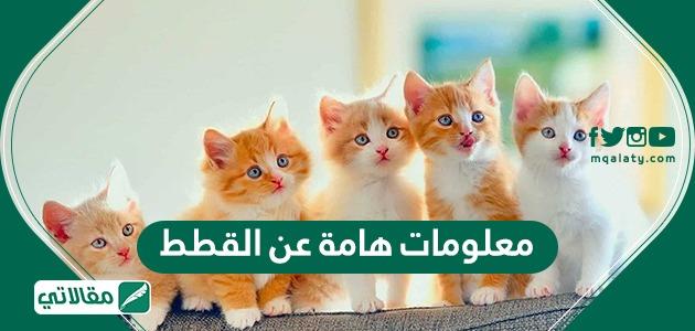 معلومات عامة عن القطط