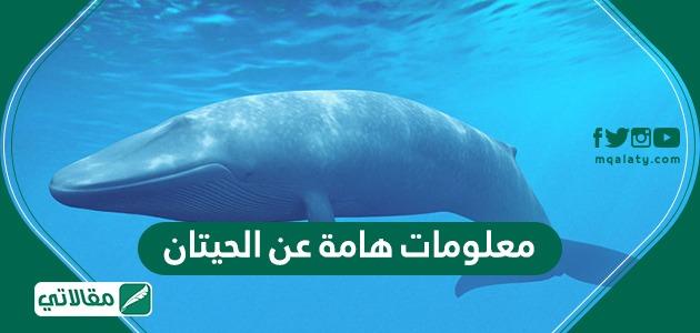 معلومات عامة عن الحيتان