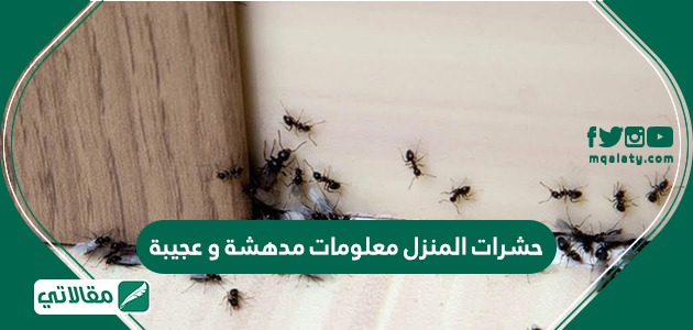 حشرات المنزل معلومات مدهشة وعجيبة