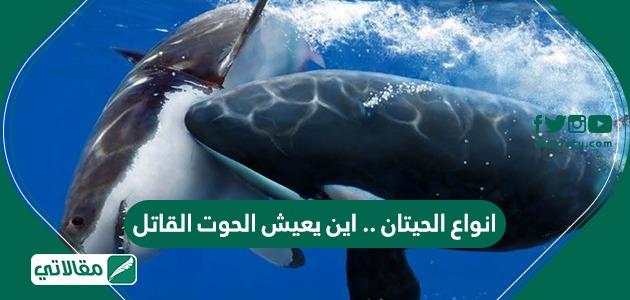 انواع الحيتان .. واين يعيش الحوت القاتل