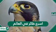 اسرع طائر في العالم