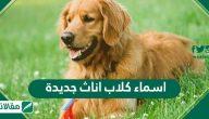 اسماء كلاب اناث جديدة .. نصائح لاختيار اسم كلب انثى مثالي