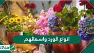 أنواع الورد واسمائهم .. اعرف أجمل انواع الورد البلدي وصفاته