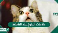علامات البلوغ عند القطط .. كيفية التعامل معها بالتفصيل