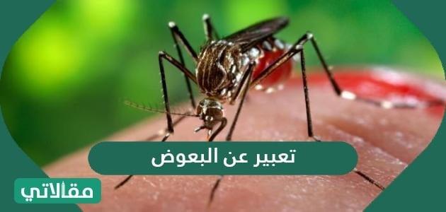تعبير عن البعوض .. موضوع تعبير مميز عن البعوض 2021
