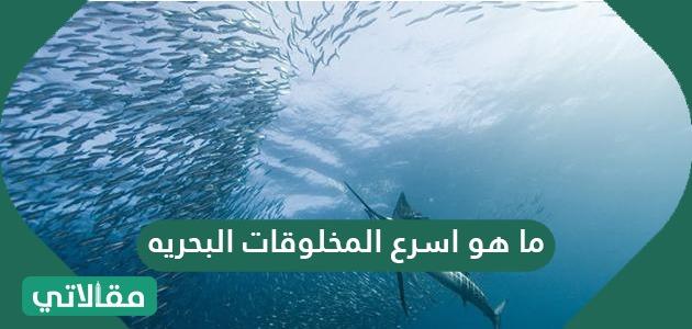 ما هو اسرع المخلوقات البحريه .. ترتيب اسرع المخلوقات البحرية