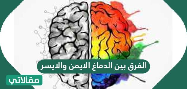 الفرق بين الدماغ الايمن والايسر .. اعرف حقيقة نصف الدماغ الايمن والايسر