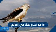 ما هو اسرع طائر في العالم .. أغرب وأهم المعلومات عنه