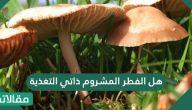 هل الفطر المشروم ذاتي التغذية