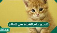 تفسير حلم القطط في المنام