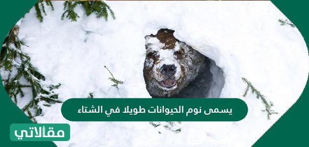 يسمى نوم الحيوانات طويلا في الشتاء .. ما هي اسباب نوم الحيوانات في الشتاء