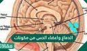 الدماغ واعضاء الحس من مكونات