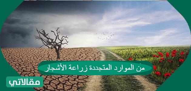 من الموارد المتجددة زراعة الأشجار