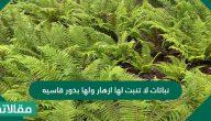 نباتات لا تنبت لها ازهار ولها بذور قاسيه
