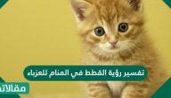 تفسير رؤية القطط في المنام للعزباء والحامل والمتزوجة بالتفصيل