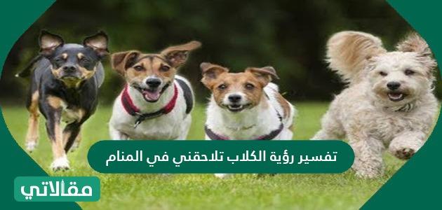 تفسير رؤية الكلاب تلاحقني في المنام للعزباء والمتزوجة والحامل بالتفصيل