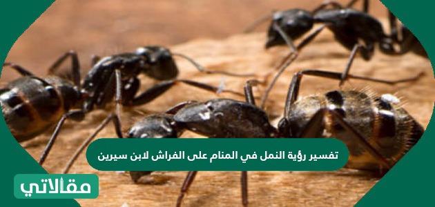 تفسير رؤية النمل في المنام على الفراش لابن سيرين