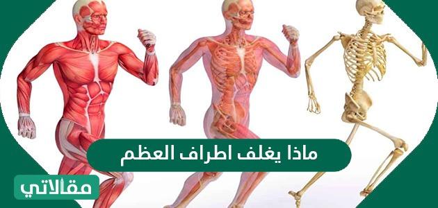 ماذا يغلف اطراف العظم