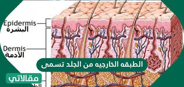 الطبقة الخارجية من الجلد تسمى ؟