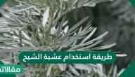 طريقة استخدام عشبة الشيح