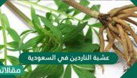 عشبة الناردين في السعودية