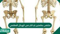 ملتقى عظمتين او اكثر في الهيكل العظمي