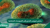هل ينتمي فيروس الجدري إلى الفيروسات الارتجاعية