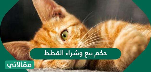 حكم بيع وشراء القطط