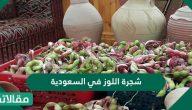 شجرة اللوز في السعودية المشهورة ببياض ثمارها