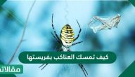 كيف تمسك العناكب بفريستها