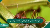من صفات عش النمل الغريب أنه مصنوع من ماذا وما هي أنواعه والفرق بينهم