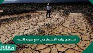 تساهم زراعة الأشجار في منع تعرية التربة