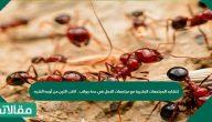 تتشابه المجتمعات البشرية مع مجتمعات النمل في عدة جوانب . اكتب اثنين من أوجه الشبه