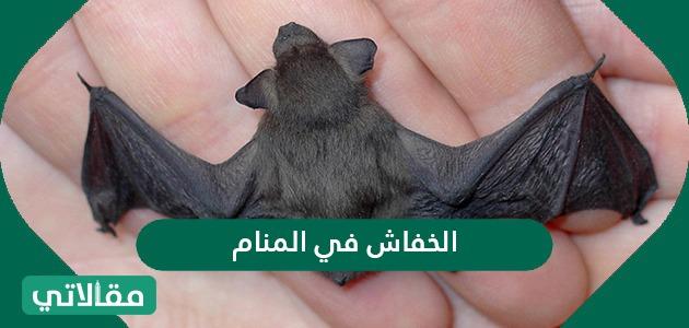 تفسير حلم الخفاش في المنام