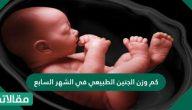 كم وزن الجنين الطبيعي في الشهر السابع
