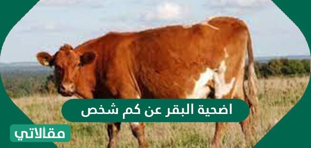 أضحية البقر عن كم شخص