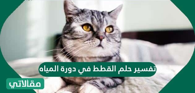 تفسير حلم القطط في دورة المياه