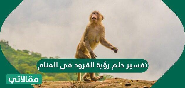 تفسير حلم رؤية القرود في المنام