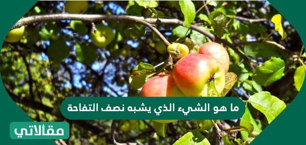 ما هو الشيء الذي يشبه نصف التفاحة