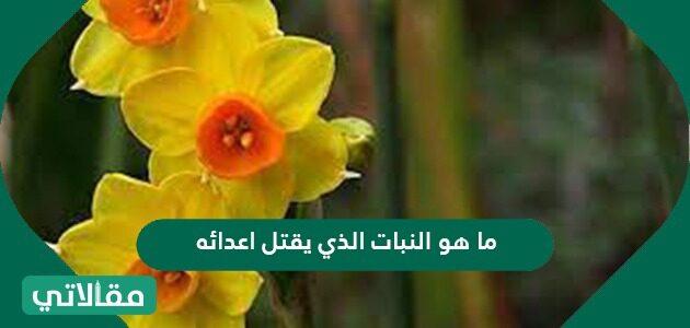 ما هو النبات الذي يقتل أعدائه
