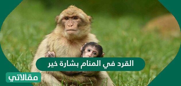 القرد في المنام بشارة خير