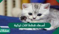أسماء قطط إناث تركية وذكور ومميزة