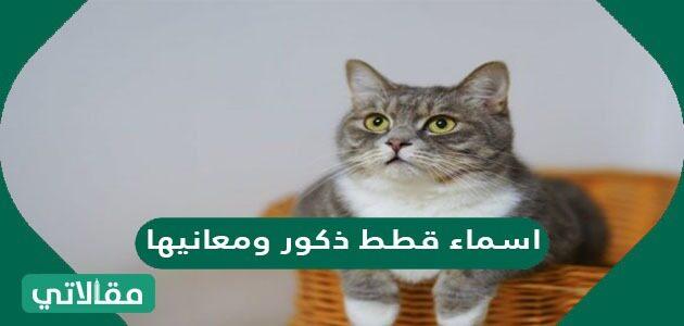 اسماء قطط ذكور ومعانيها عربية وأجنبية مميزة