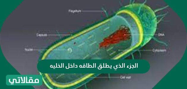 الجزء الذي يطلق الطاقة داخل الخلية