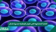 الخلايا المتشابهة التي تقوم بالوظيفة نفسها تشكل