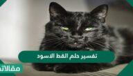 تفسير حلم القط الاسود في المنام للإمام الصادق ولابن سرين