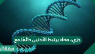جزيء dna يرتبط الأدنين دائمًا مع