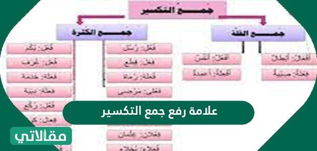 علامة رفع جمع التكسير