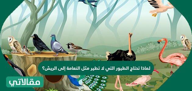 لماذا تحتاج الطيور التي لا تطير مثل النعامة إلى الريش؟