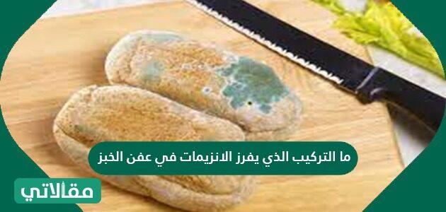 ما التركيب الذي يفرز الإنزيمات في عفن الخبز؟